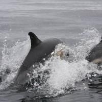 Sea Safari Season Ahead