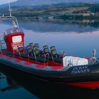 Welcome to Bere Island Sea Safari