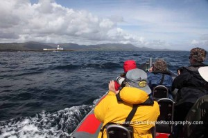 Bere Island Sea Safari